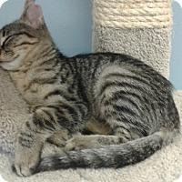 Adopt A Pet :: Maci - Lake Charles, LA