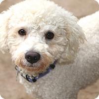 Adopt A Pet :: Coventry - Norwalk, CT