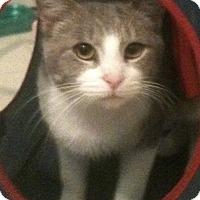 Adopt A Pet :: Christopher - Huntsville, AL
