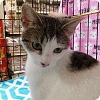 Adopt A Pet :: Dottie - Columbus, OH