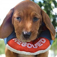 Adopt A Pet :: ANDY - ADOPTION PENDING! - Pennsville, NJ