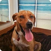 Adopt A Pet :: BEAR-I've had a crappy life! - DeLand, FL