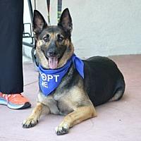 Adopt A Pet :: Dakota - Irvine, CA