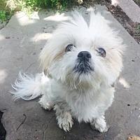 Adopt A Pet :: Rachael - Baltimore, MD