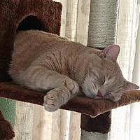Adopt A Pet :: Cubby - Apopka, FL