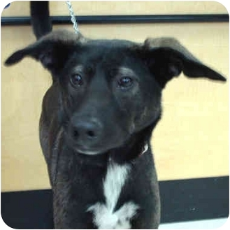 Terrier (Unknown Type, Medium) Mix Dog for adoption in McCormick, South Carolina - Teddy
