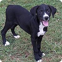 Adopt A Pet :: Hannah - Adamsville, TN