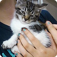 Adopt A Pet :: Raoul - Riverhead, NY