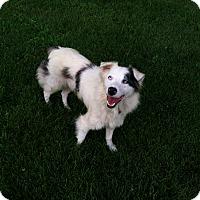 Adopt A Pet :: Misty - Columbia, SC