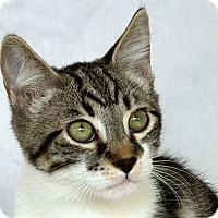 Adopt A Pet :: Yolus V - Sacramento, CA