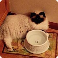 Adopt A Pet :: Miss Abby - Columbus, OH