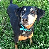 Adopt A Pet :: Emma - New Richmond, OH