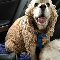 Adopt A Pet :: Tom - Etters, PA