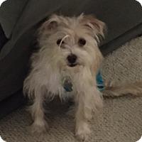 Adopt A Pet :: Gidget - Beavercreek, OH