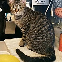 Adopt A Pet :: Scarlet - Lindsay, ON