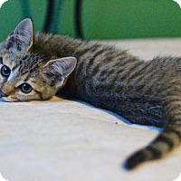 Adopt A Pet :: Guacamole - Wilmington, NC