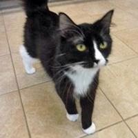 Adopt A Pet :: Yanin - Park Rapids, MN