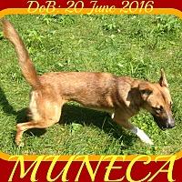 Adopt A Pet :: MUNECA - Halifax, NS