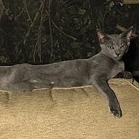 Adopt A Pet :: Oscar - Tampa, FL