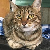 Adopt A Pet :: Hootie - Columbus, OH