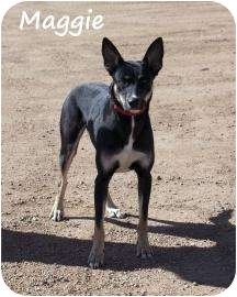 German Shepherd Dog Mix Dog for adoption in Divide, Colorado - Maggie