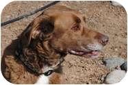 Labrador Retriever Mix Dog for adoption in Portola, California - Boss