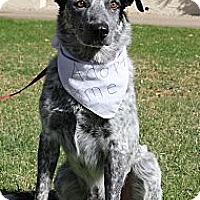 Adopt A Pet :: Captain - Phoenix, AZ