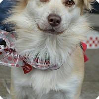 Adopt A Pet :: Luigi - Redondo Beach, CA