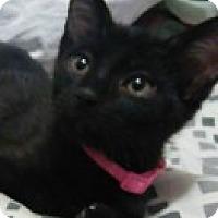 Adopt A Pet :: Darth - McHenry, IL