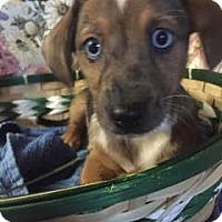 Adopt A Pet :: Justin-pending adoption - East Hartford, CT