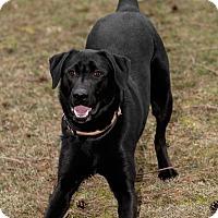 Adopt A Pet :: Hawk - Westfield, NY