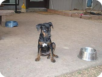 Doberman Pinscher Mix Dog for adoption in Pipe Creed, Texas - Helen