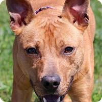 Adopt A Pet :: Skippy - Bedford, VA
