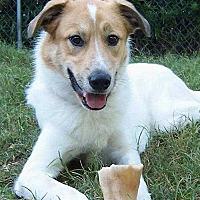Adopt A Pet :: Brandon - Sarasota, FL
