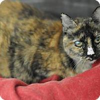 Adopt A Pet :: Alice (Cocoa Center) - Cocoa, FL