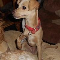 Adopt A Pet :: Misty - Yucaipa, CA