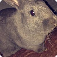 Adopt A Pet :: Bean - Conshohocken, PA