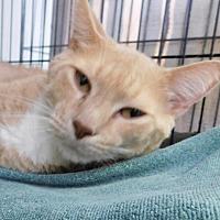 Adopt A Pet :: Holden - Winston-Salem, NC