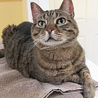Adopt A Pet :: Toni - Eastsound, WA