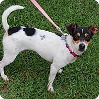 Adopt A Pet :: Avery - Winder, GA