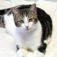 Adopt A Pet :: Maxwell - Thomasville, GA