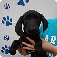 Adopt A Pet :: Adena - Oviedo, FL