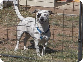 Terrier (Unknown Type, Small)/Jack Russell Terrier Mix Dog for adoption in Buchanan Dam, Texas - Bella