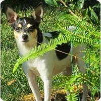 Adopt A Pet :: Bandit - Concord, CA