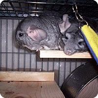 Adopt A Pet :: Cheech & Josephina - Avondale, LA