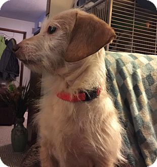 Terrier (Unknown Type, Medium) Mix Dog for adoption in Laingsburg, Michigan - Lily