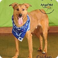 Adopt A Pet :: Caiden - Topeka, KS