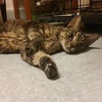 Adopt A Pet :: Kanga - Waupun, WI