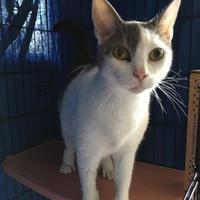Adopt A Pet :: Oddball - Orleans, VT