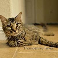 Adopt A Pet :: Hanna - Drippings Springs, TX